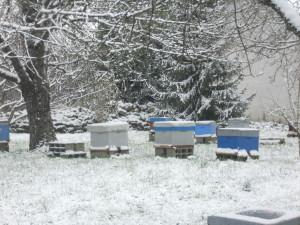 L'activité réduite des abeilles en hiver...