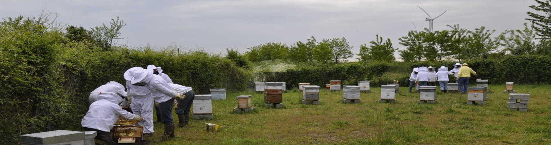 Découvrir l'apiculture et l'abeille