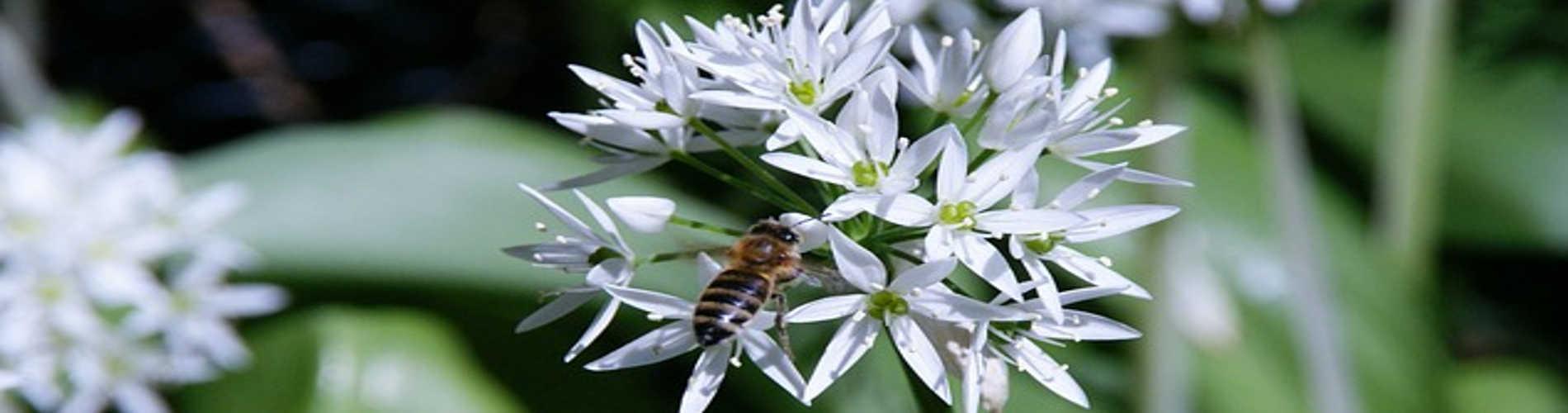 Les abeilles aiment les fleurs